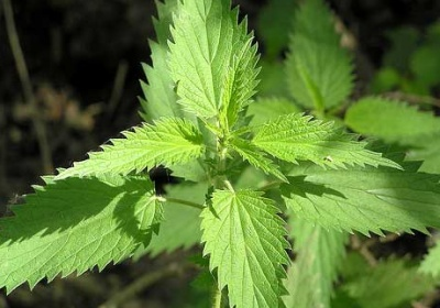 Ən məşhur şəfalı bitki