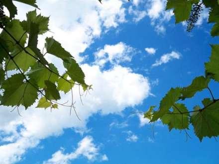 Hava proqnozu-5 iyul