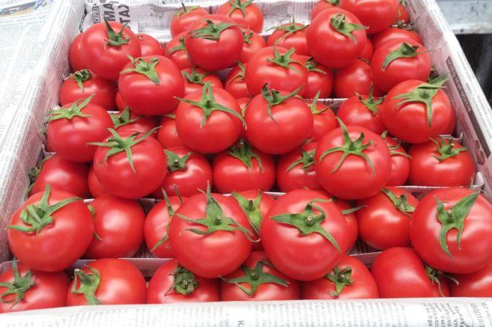 Yediyimiz pomidorlara hansı zərərli dərmanlar vurulur? – Bakı bazarlarından reportaj